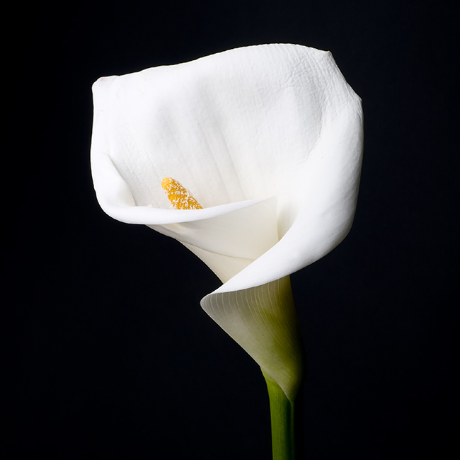 messages-for-funeral-flowers-FT