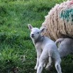 Mike Burrows2