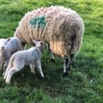 Mike Burrows3