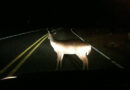 Deer left stranded in areas of Corby